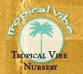 TropicalVibe Testimonial